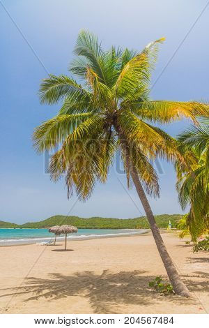 Idyllic sand beach with palm tree on Caribbean Sea. Resort in Cuba