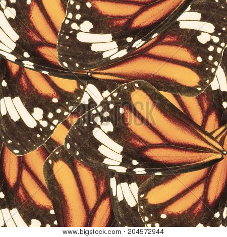 Seamless Pattern Made From Monarch Butterfly Wing For Background Texture