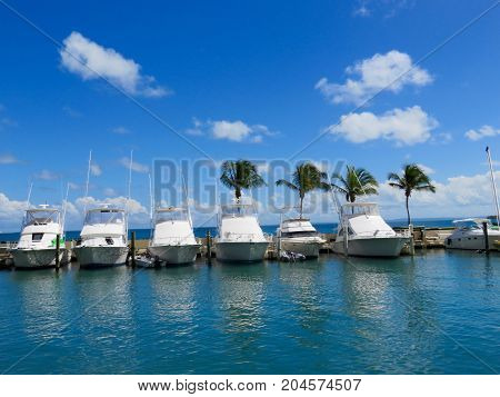 Beautiful Fishing Boats at the Dock-Tropical Pier with Palm Trees in Puerto Rico