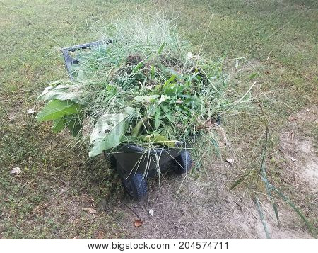 many leaves and branches and weeds in a black plastic wheelbarrow