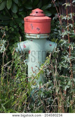 Green Fire Hydrant On A City Sidewalk