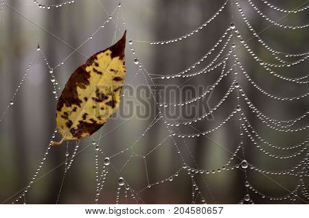 A close up of a yellow leaf caught in a spider web