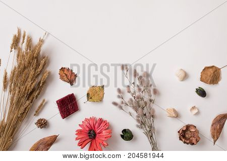 Dry Autumn Plants With Space For Text