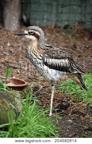 the curlew is standing on one leg while resting