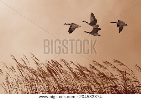 Tranquil scene with flying birds environment or ecology concept