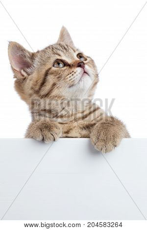 Funny kitten peeking out of a blank banner isolated on white background
