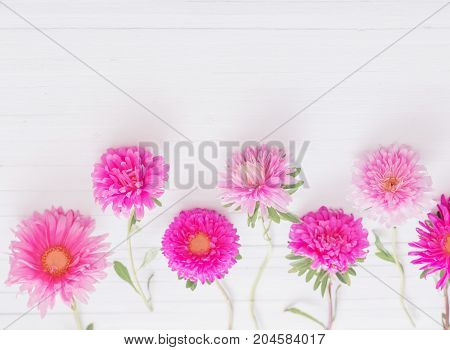 the pink asters on white wooden background