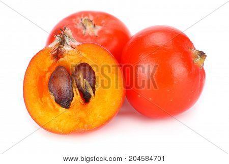 Red Rowan Berries Isolated On White Background. Macro