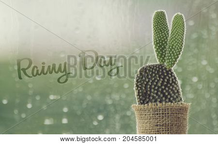 cactus on a rainy day with water drop at window background. drops of rain on window glass background.