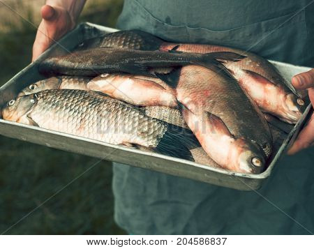 Men's hands hold a tray with freshly caught wild fish carp and bream