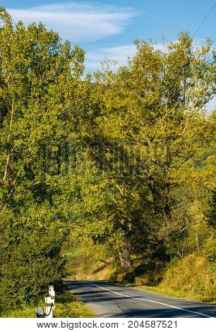 road through forest in mountains. lovely transportation scenery in autumnal countryside morning