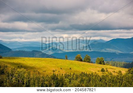 Grassy Meadow With Few Trees On Hill