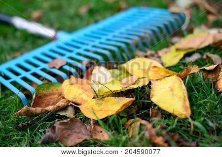 Pile of fall leaves with fan rake on green grass lawn