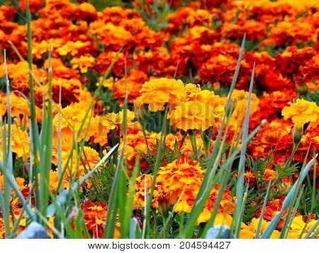 Beautiful Flowers Close Up , Jiuzhaigou National Park, Sichuan, China