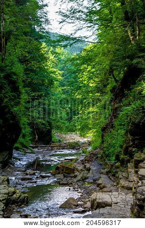 Photo of mountain river flowing through the green forest in Carpathian mountains
