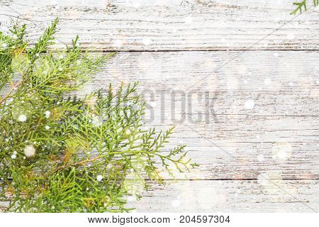 Thuja Twigs On White Wooden Background With Snow And Bokeh, Copy Space