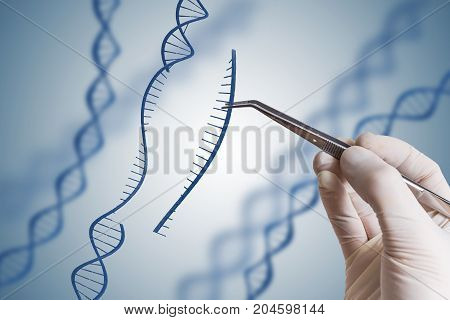 Genetic Engineering, Gmo And Gene Manipulation Concept. Hand Is
