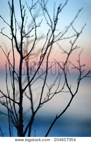 The Baltic Sea through the branches of a tree without leaves at sunset in winter