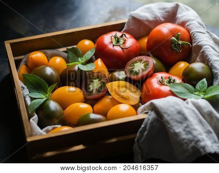 Colorful tomatoes of different sizes and kinds and green twigs of basil in wooden tray on dark background