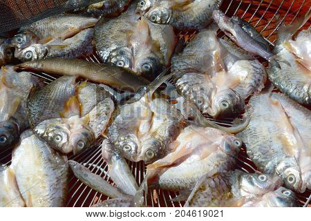 Food preservation salty fish drying with sunlight