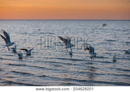 gulls fly, gulls in the water, seagull on the background of the sea, beautiful, wildlife