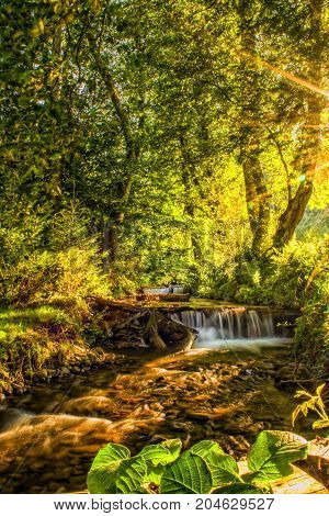 Sunlit river in a forest, small natural waterfall. Clear mountain water