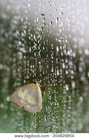 butterfly on mirror in rainy season - Stock Image