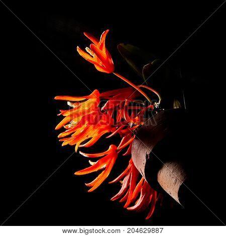 flower in pot on black background - Stock Image