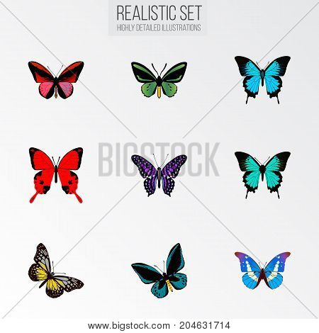 Realistic Sangaris, Demophoon, Tropical Moth And Other Vector Elements