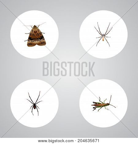 Realistic Spider, Locust, Spinner And Other Vector Elements