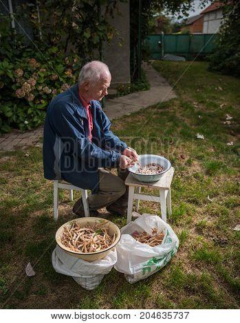 Senior Man Peeling  Pinto Beans
