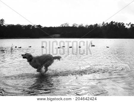 It's too cold - dog running out of lake