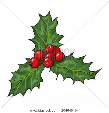 Mistletoe branch with leaves and berries, holly berry Christmas decoration element, sketch vector illustration on white background. Mistletoe branch with leaves and berries, Xmas decoration