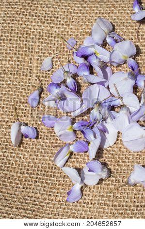 Fresh Flower petals found on linen canvas