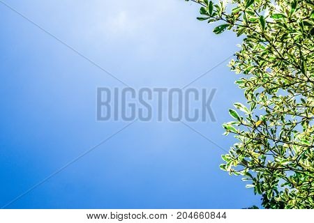 Tropical green leaf frame and border blue sky background