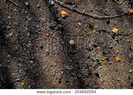 Glass shards. Bottle cap and dry leaves on the asphalt. Asphalt background. Autumn