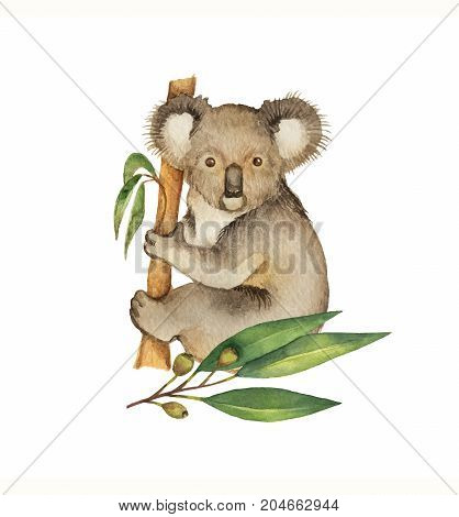 Watercolor hand painted green floral card with eucalyptus leaves and Koala isolated on white background. Cute illustration design children books, zoo and posters.
