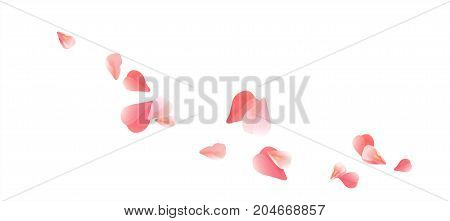 Petals Roses Flowers. Red Pink Sakura flying petals isolated on white background. Vector EPS 10, cmyk