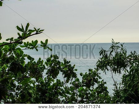 a sea  view from behind green trees