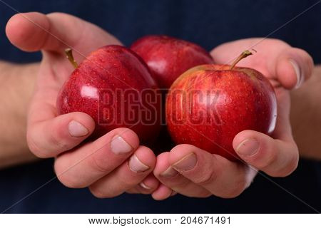 Male Hands Hold Red Apples. Apples Trio On Tshirt Background.