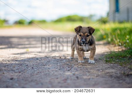 Adorable puppy curiously looking in the camera. Soft bokeh on background