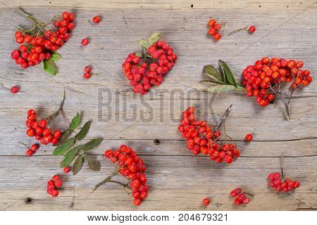 Pattern made of rowan berries on on rustic wooden background. Flat lay, top view