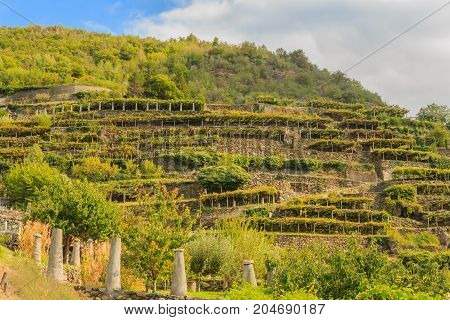 the characteristic viticultural landscape of Carema, Piedmont,Italy /the slopes hilly have been terraced with the construction of dry stone supporting walls on which the pylons rise with vineyards