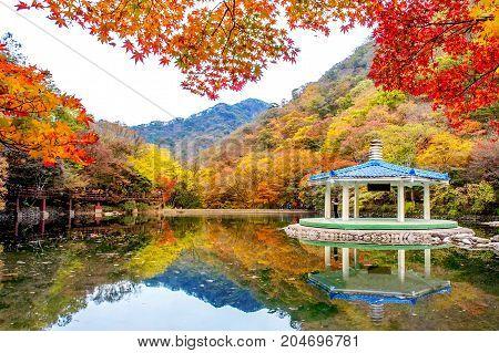 Autumn in Naejangsan National park South Korea.