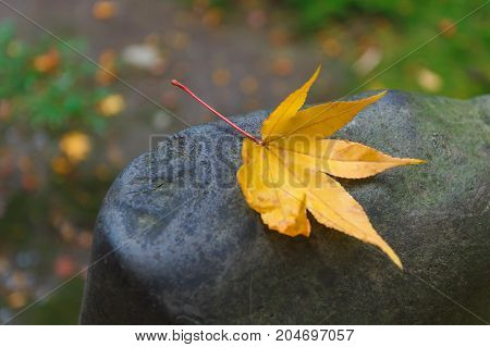 Single yellow maple autumn leaf on stone texture background. concept of happy heart autumnal.