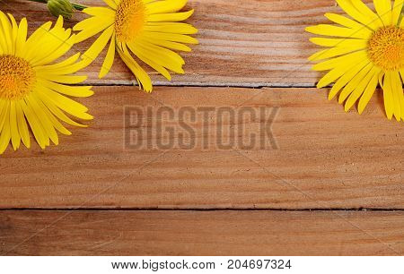 Yellow Chamomile On Wooden Background