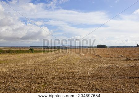 Autumn Agricultural Scenery