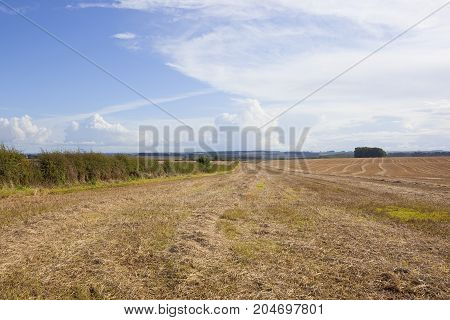 Harvested Wheat Field And Hedgerow