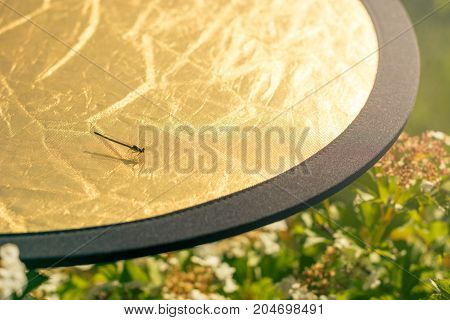 A dragonfly sits on a golden reflector during a photograph. Backstage