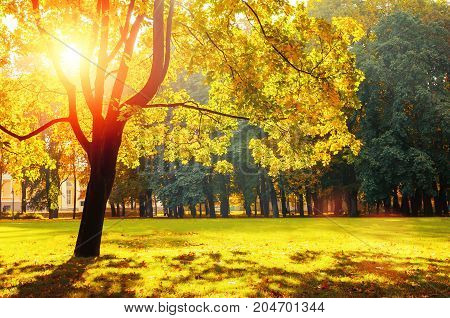 Autumn landscape. Sunny autumn park lit by bright sunshine. Autumn trees in the park in sunny autumn weather. Deciduous autumn tree in the sunny autumn park. Beautiful autumn landscape scene with autumn trees